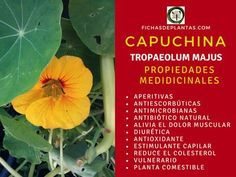 Garden, Cover, Nature, Mini, About Plants, Herbal Medicine, Natural Herbs, Natural Antibiotics, Natural Remedies