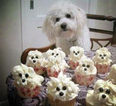 Poodle pupcakes!