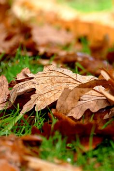 Autumn leaves on the ground at West Dean Gardens in West Sussex (Image credit Jeff Potter) Chichester West Sussex, Sunken Garden, Autumn Leaves, Dean, Pergola, Restoration, Places To Visit, Gardens, Image