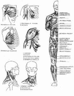artistic anatomy by dr paul richer pdf