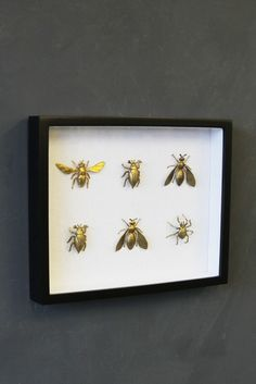 Insects have been displayed for their incredible beauty for years. This Framed Brass Insects Artwork takes the sting out of the framed insect concept by featuring beautiful brass insects rather than a real one. Inspiration For The Day, Layout Inspiration, Home Decor Inspiration, Blue Master Bedroom, Rockett St George, Home Pictures, Typography Art, Frames On Wall, All Art