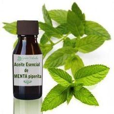 Cuáles son las propiedades del aceite esencial de menta