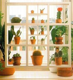 window shelves for decorating with glass items, house plants and tableware Window Shelf For Plants, Window Shelves, Plant Shelves, Open Shelves, Shelving, Blue Plants, Ivy Plants, Plants Indoor, Garden Windows