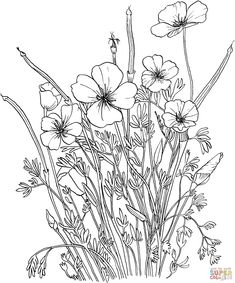 Golden Poppy or California Poppy coloring page | SuperColoring.com