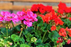 Vertical Garden Systems, Vertical Garden Design, Lipstick Plant, Pocket Garden, Mosquito Repelling Plants, Indoor Flowers, Flower Names, Colorful Plants, Plant Species
