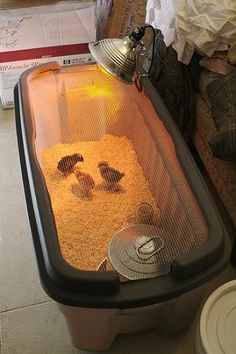 10 DIY Chick Brooder- Set Up A Temporary Home For New Chicks.