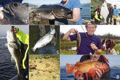 Fish stocks in Vesteralen #ScanAdventures