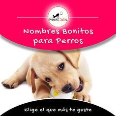 19 Ideas De Nombres Para Perros En 2021 Perros Nombres Para Perros Machos Nombres De Perro Hembra