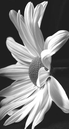 la folie des fleurs  F09df9d1b346a52e1de563d28ce26799