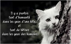 Pretty Words, Cool Words, Vegan Quotes, Poetry Quotes, Beautiful Cats, I Love Cats, Animal Pictures, My Friend, Life Is Good