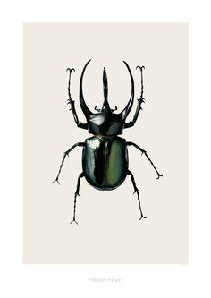 Chalcosoma atlas - Atlas Beetle print via Hagedornhagen