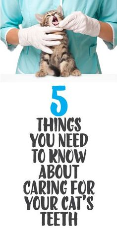 5 Things You Need To Know About Caring For Your Cat's Teeh Cat Care Tips, Dog Care, Pet Tips, Meister Proper, Cat Health Care, Health Tips, Kitten Care, Cat Behavior, Cat Facts