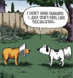 Funny Animal Pictures, Funny Animals, Animal Funnies, Animal Jokes, Animal Humour, Random Pictures, Dog Pictures, Funny Photos, Funny Cartoons