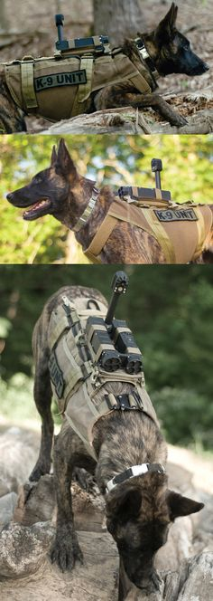 Having military trained K-9 is an invaluable asset not only on the field, but as a companion.