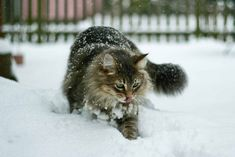These kitties enjoy a snowy day as much as the rest of us.