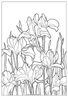 A set of 10 beautiful coloring pages from my Coloring Pages collection. Each coloring page comes on a separate sheet. Flower Art Drawing, Flower Line Drawings, Art Drawings, Color Me Beautiful, Colouring Pages, Fabric Painting, Botanical Illustration, Colorful Pictures, Word Art