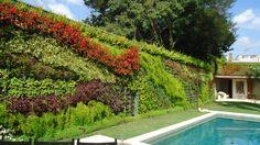 wall green jardim vertical -