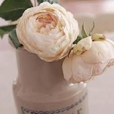old english big vintage roses - Google Search