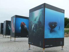 Fotofestival Horizonte 2013 in Zingst | Giganten der Meere am Strand von Zingst (c) Frank Koebsch (7)