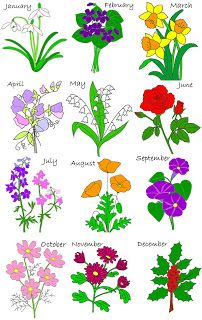 Birth month flowers  January - the Carnation or Snowdrop February - the Violet or Primrose March - the Jonquil (aka Daffodil or Narcissus) April - Sweet Pea or Daisy May - the Lily of the Valley June - the Rose July - the Larkspur or Water Lily August - the Gladiolus or Poppy September - the Aster or Morning Glory October - the Calendula November - the Crysanthemm December - the Narcissus