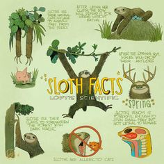Sloth Facts... uh, it was on the internets so it HAS to be true! (no, it is not true, and that some folks think it IS makes me weep for the future.)