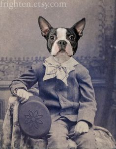 5x7 Boston Terrier Dog Art Print, Mixed Media Collage Print, Henry, Portrait of a Boston Terrier, Altered Victorian Photograph, frighten. $15.00, via Etsy.