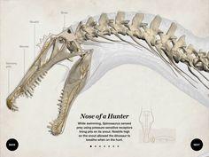 building-spinosaurus-04-nose.jpg (1024×768)