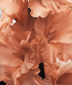 flowers peach aesthetic orange pink pastel light korean soft minimalistic kawaii cute g e o r g i a n a : a e s t h e t i c s Orange Aesthetic, Aesthetic Colors, Powerful Art, Peach Colors, Colours, Color Inspiration, Aesthetic Wallpapers, Planting Flowers, Photo And Video