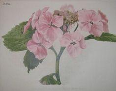 pink flowers  no. - 05