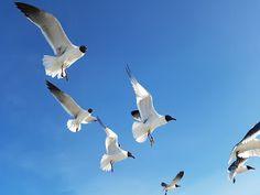 Crônicas Americanas: Somos aves voando
