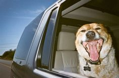 Re-pin if you like to take road trips with your animal companions. #LandRover #LR4 #LandRoverPets #Dog