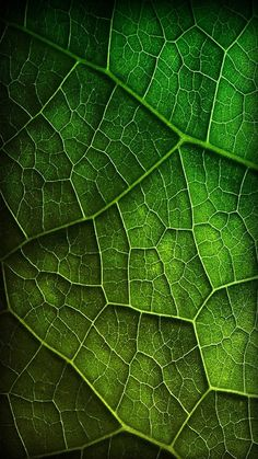 I 40 shades of green l Galaxy S3 Wallpaper, Space Wallpaper, Cellphone Wallpaper, Mobile Wallpaper, Texture Photography, Abstract Photography, Macro Photography, Natural Forms, Natural Texture