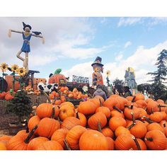 Family-friendly dall fun: Now through November 8, head to Linvilla Orchards in Media, Pa., for Pumpkinland, featuring a display of 100+ tons (!) of pumpkins, live music, hayrides, a corn maze, pick-your-own apples and much more. (Photo by R. Hara for Visit Philly)