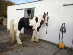 Next Bring your Own Horse break Friday March – Sunday March Let Connemara Equestrian Escapes look after your horse while Renvyle House Hotel looks after you Riding Holiday, Ireland Holiday, Connemara, Days Out, Horse Riding, Horseback Riding, Equestrian, March 14th, Bring It On