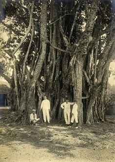 Indo-Europees gezelschap voor een waringin, vermoedelijk op Java. 1910-1920