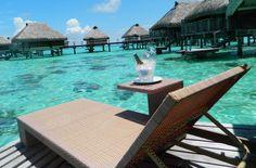 Fotos de Viagem à Polinésia Francesa: Os resort estão entre as atrações da Polinésia Francesa. Na ilha de Moorea, o Hilton é um dos principais, mas é preciso uma boa economia para passar alguns dias por lá. Veja também outras fotos dessa viagem pela Polinésia Francesa, nas ilhas de Moorea e Bora Bora.