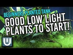14 Low Light Aquarium Plants For Beginners. The easiest plants to grow your Aquarium cleaner with no additional work. For beginners and busy people.