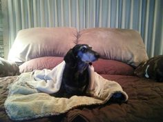 My silly Baron the Dachshund. 15 and a half years old. :)