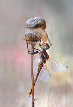 Snail and Dragonfly by Mustafa Öztürk