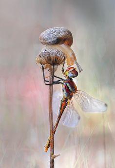 Snail and Dragonfly by Mustafa Öztürk