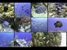 Fish,fish,fish,fish,fish,fish - Nature, Animals and Exercise from Lots To Learn Preschool Videos - YouTube