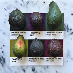 "2,596 Me gusta, 82 comentarios - lucy litman (@lucialitman) en Instagram: ""Avocados from a little stand in Salinas. #pantoneposts"""