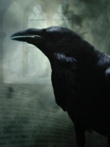http://nextdoornature.org/2011/10/29/scary-smart/    Scary-smart ~ great blog post about ravens.