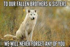 Bastet Goddess, Native American Wolf, Wolf Life, Alpha Wolf, Wolf Photography, Science Illustration, Wolf Quotes, Wolf Wallpaper, Warrior Quotes