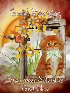 Good morning sister have a nice day 💝✨✨ Saturday Morning Images, Good Morning Happy Saturday, Good Morning Sister, Morning Cat, Saturday Quotes, Good Morning Funny, Good Morning Picture, Good Morning Friends, Morning Pictures