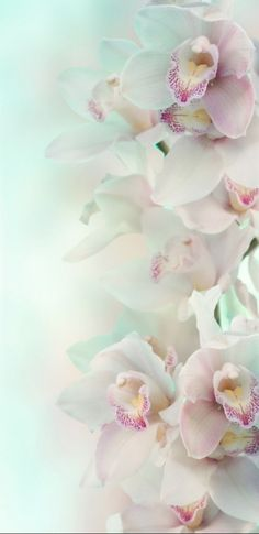 Orchid Wallpaper, Wallpaper Backgrounds, Wallpapers, Writing Styles, Floral Flowers, Orchids, Beautiful Flowers, Phone, Plants