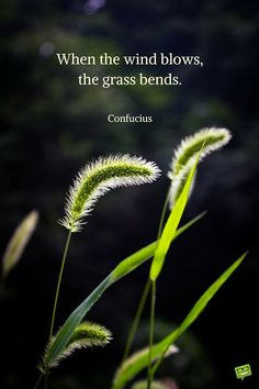 Confucius quotes When the wind blows,the grass bends. Zen Quotes, Best Inspirational Quotes, Nature Quotes, Wisdom Quotes, Words Quotes, Motivational Quotes, Awesome Quotes, Spiritual Quotes, Sayings
