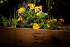 Soil Box by Farmer Jay
