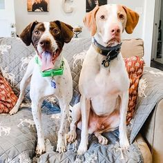 Dolly (left) is working 9 to 5 to find the perfect forever home.  This sweet 4 year-old is one of the most expressive dogs to ever pass through @pointerrescue_org. She will always put a smile on your face. She gets along well with other dogs and humans. Dolly is available for adoption in Maryland. 🐾🐾 Email pro_adoptions@yahoo.com to learn more and #AdoptPureLove! Awesome Dogs, 4 Year Olds, Maryland, Best Dogs, Pitbulls, Adoption, Smile, Pure Products, Pitbull