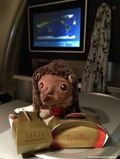 Elbe with her chocolate luggage on a flight to South Korea representing Teddy & Friends. South Korea, Teddy Bear, Adventure, Chocolate, Friends, Travel, Animals, Amigos, Viajes